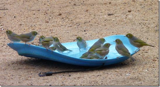 Birds hatch 1