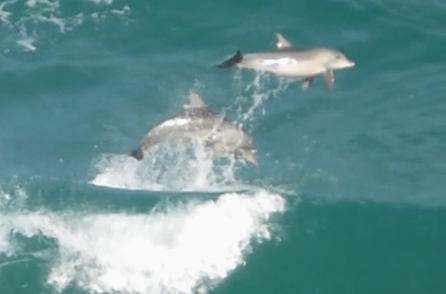 Dolphinsjump1 (3)