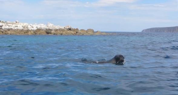 seals west island 1