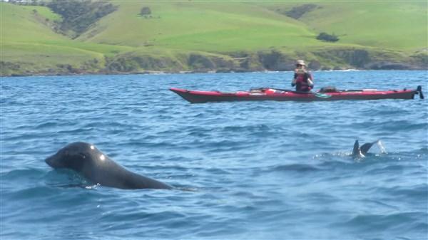 seals west island2