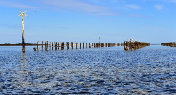 Oyster beds in the shallow waters of the bay