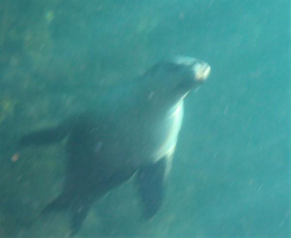 Sea lions played around us